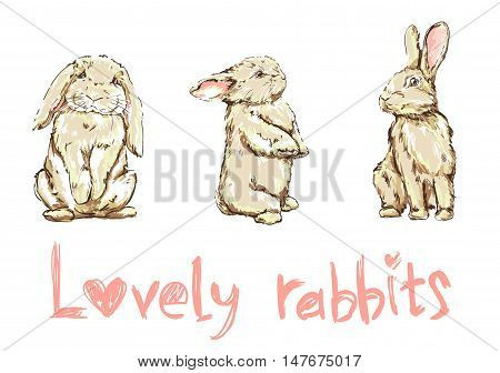 vector illustration of a cute bunny, set rabbits illustration, lovely rabbits