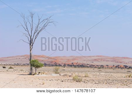 The Namib Desert, Roadtrip In The Wonderful Namib Naukluft National Park, Travel Destination And Hig