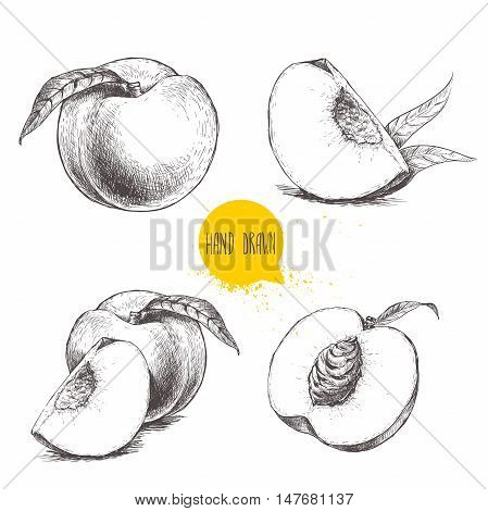 Hand drawn sketch style peach fruit set. Vintage eco food vector illustration. Ripe peach peach slices. White background