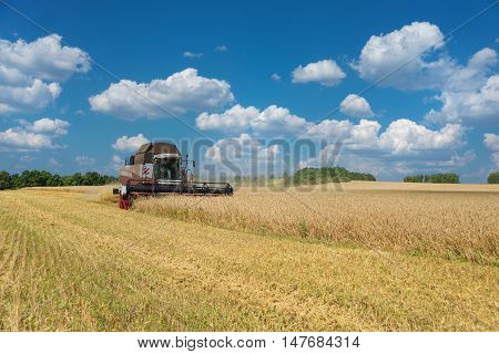 Combine harvester gather the harvest on a large field of ripe wheat against a blue sky with white clouds