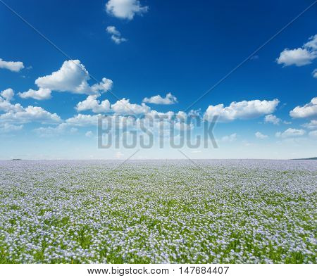 Beautiful rural landscape: vast blue field of blooming flax under the blue sky with white clouds