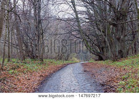 Old autumn road in Kaliningrad region. Russia.