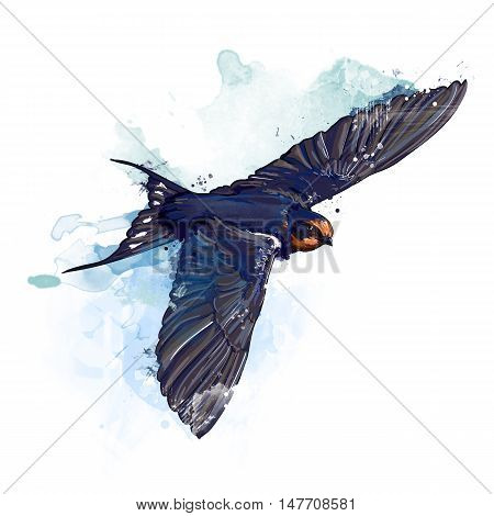 Spring bird. Watercolor swallow illustration. bird illustration