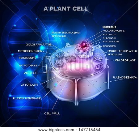 Plant Cell Structure And Dna Chain