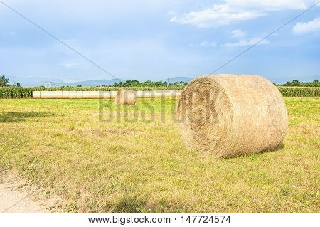 Agricultural landscape with hay bales and a blue sky