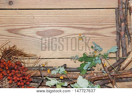 decoration composition on wooden background. Top view of boards lined made of fir branches needles and pressed yellow flowers and bright celandine dried red berries of mountain ash with place for your text