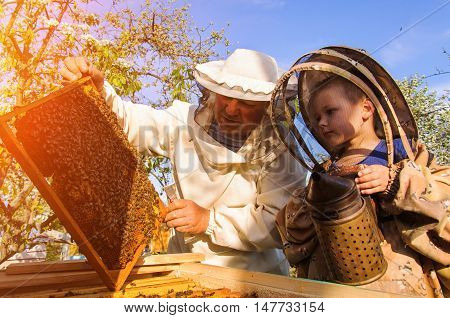 Grandpa beekeeper passes his experience little grandson