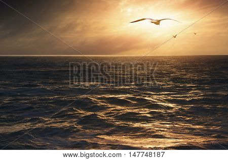 Inspiring ocean view with flock of seagulls flying into the golden Summer sunset