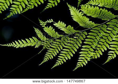 Ferns In The Cloud Forest