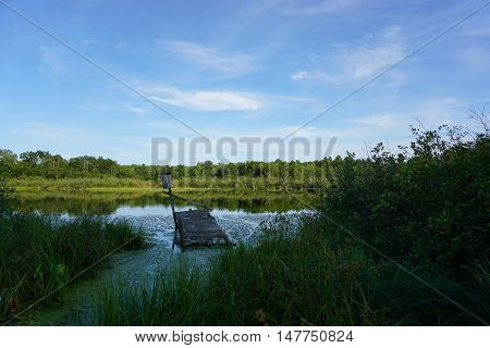 Sinking dock on private lake in wooded area