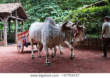 Costa Rican Ox Cart