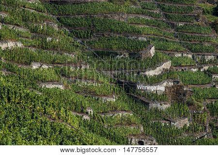 Famous German Wine Region Moselle River in Winningen