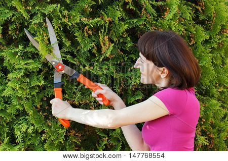 Woman uses gardening tool to trim hedge cutting bushes with garden shears seasonal trimmed bushes