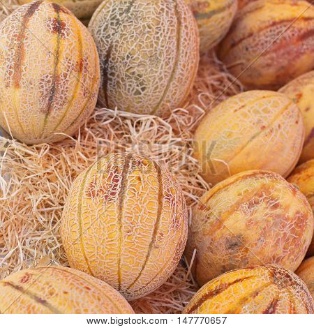 Honeydew Melons in Straw at Farmers Market