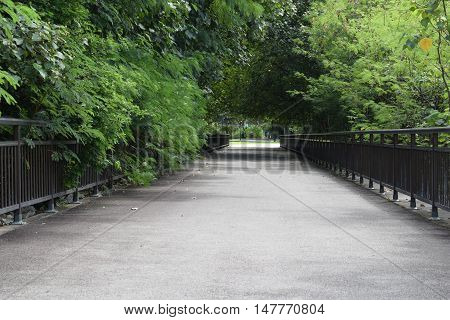 A peaceful beautiful walkway in a park