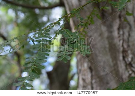 A beautiful fern growing on the bark of a tree