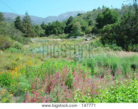 Santa Barbara Landscape