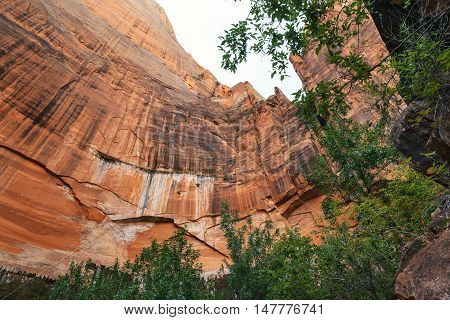 Zion National Park in the summer Utah USA