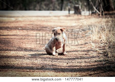 Local young dog sitting on the ground in evening