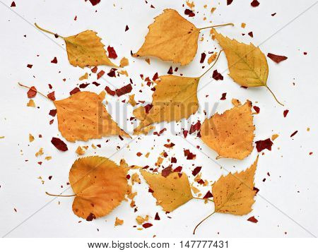 Autumn dried golden leaves scattered square background. Fall craft.