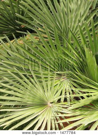 Patterns  Palms