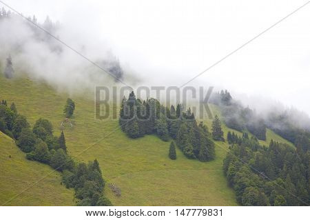 Green mountain with trees and heavy fog