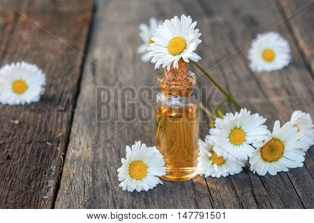 Natural chamomile oil with flowers. Organic essence for spa and massage