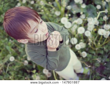 Kid blowing dandelion flower