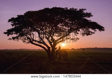 big tree with a vibrant sky on the sunset