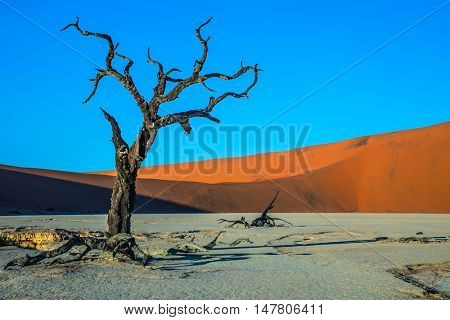 Sunset. The bottom of dried lake Deadvlei, with dry trees. Ecotourism in Namibia, Namib-Naukluft National Park