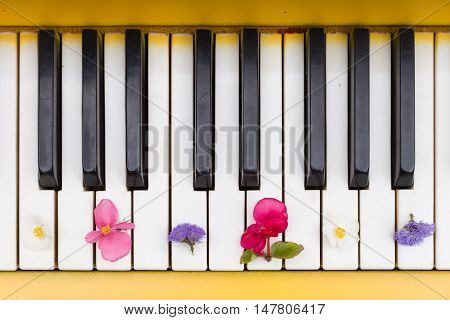 Top view on yellow piano. Closeup of piano keys with nice bright flowers. Music concept
