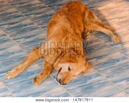 lose up portrait of dog laying on the floor