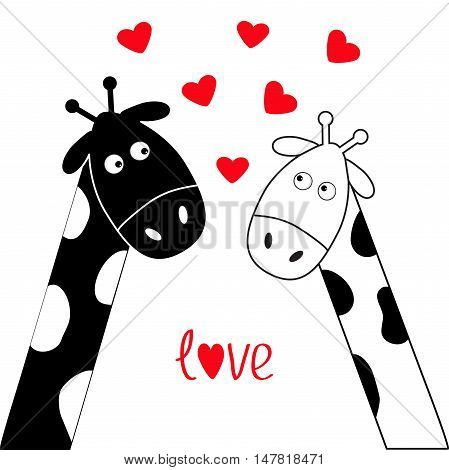 Cute cartoon black white giraffe boy and girl. Camelopard couple on date. Long neck. Funny character set. Happy family. Word Love Greeting card Little hearts. Flat design. Isolated. Vector