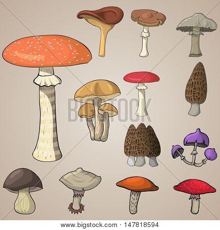 different kinds of mushrooms in cartoon stile, doodle mushrooms