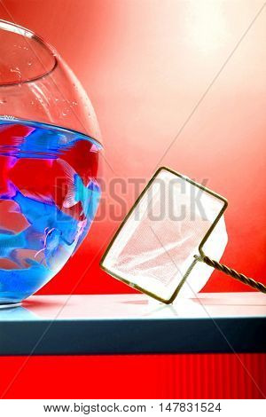 Goldfishes in red fishbowl with net