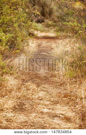 Dirt bushwalking track through bushland near Hobart Tasmania
