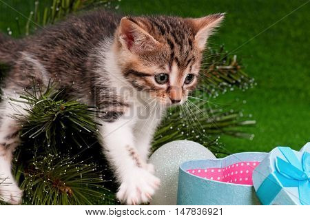 Cute kitten investigating the decorations on a Christmas tree. Cat as a present. Kitty climbing on a new year tree.
