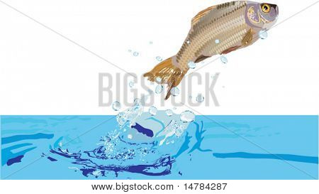 illustration with carp jumping above blue water