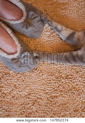Gray cat paws and woman feet in slippers on beige bathroom carpet background