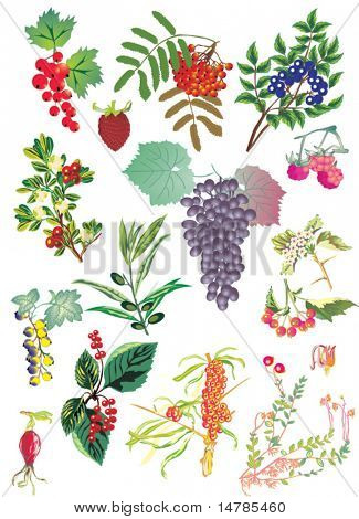 illustration with different fruits and flowers isolated on white