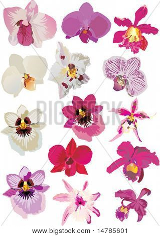 illustration with pink and white orchids collection