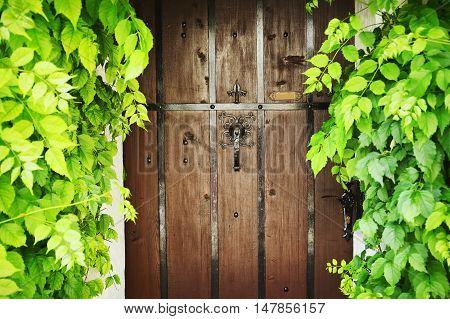 Rustic brown wooden door overgrown with ivy