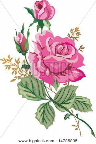 illustration with pink rose flower