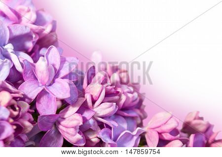 Spring frame with flowers of lilac. Lilac flowers close up. Delicate floral background.