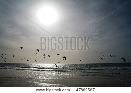 Sunset on the Nouakchott beach with flyind seagulls Mauritania