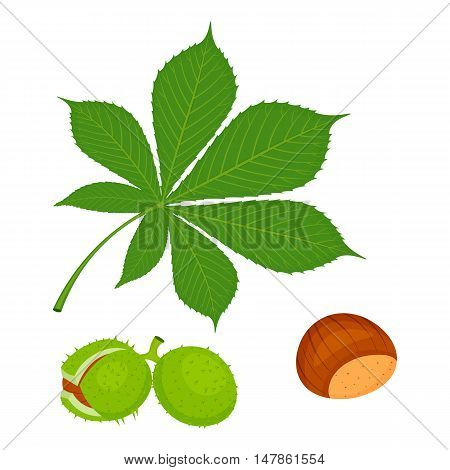 Chestnuts Set Vector Illustration isolated on a white background