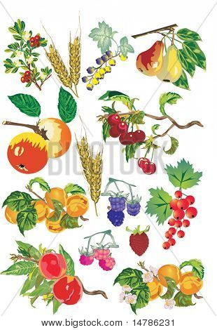 illustration with different fruits collection