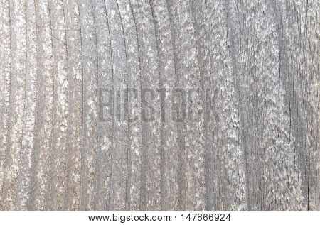 White stained painted wood.  Abstract textured background or backdrop.  Detailed wood grain pattern.