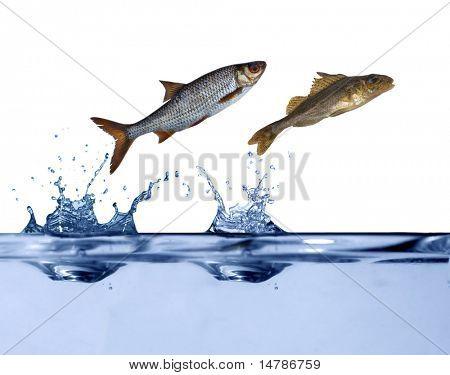 dois pequenos peixes estão saltando acima da água azul