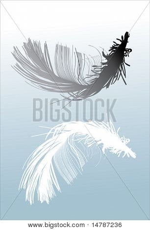 illustration with black and white feathers on blue background